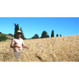 pasta MEZZI PACCHERI organic spelled flour Mulino Val d'Orcia