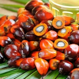 Palm oil: what it is and why it is better not to abuse it, explains a research